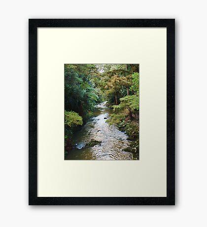 River/Nature Framed Print