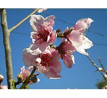 Peach Tree Photographic Print