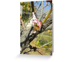 Peach Tree with a Bee Greeting Card