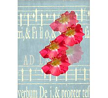Music and Roses Photographic Print