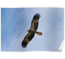 Return Of The Kites Poster