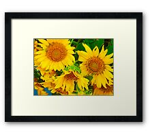 Brilliant Bunch of Sunflowers Tilt Shift Photograph Framed Print