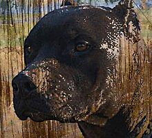 Grunge Staffordshire Terrier Pitbull Pit Bull Photograph by THarmonArt