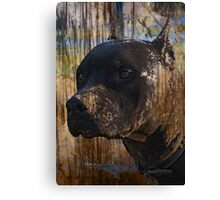 Grunge Staffordshire Terrier Pitbull Pit Bull Photograph Canvas Print