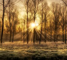 frosty morning sunrise by Art Hakker Photography