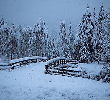 Snowy bridge at Christmas by Robert Hollo