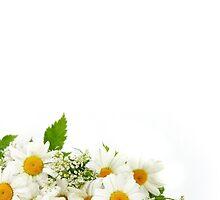 Daisies  by Abbideane
