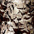 Trunk 2 by Lynne Kells (earthangel)