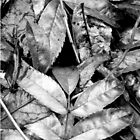 Black and White Autumn Leaves by Jade Widdowson