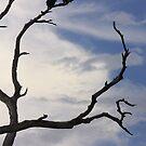 Sea Eagles by Gabrielle Camilleri