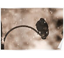 Grackle in the Snow Poster