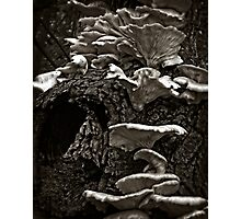 Life Begins Again in Black and White Photographic Print