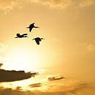 Flight of the Ibis by Jim Cumming