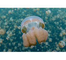 Jellyfish Lake Photographic Print