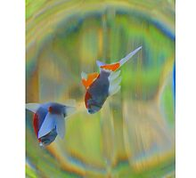 fish life in color by dale54