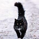 Winter Kitty by AbigailJoy