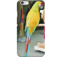 Parrot sitting on a stick iPhone Case/Skin