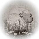 Shabby sheep by shalisa