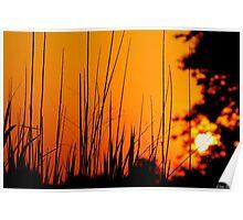 Tall Grass Summer Sunset Poster