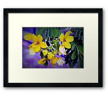 Splendid yellow flowers Framed Print