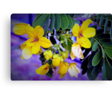 Splendid yellow flowers Canvas Print