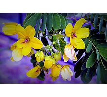 Splendid yellow flowers Photographic Print
