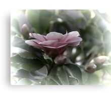 Camellia  Gets The Topaz Treatment Canvas Print