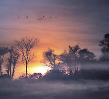 Sunrise  by larry flewers