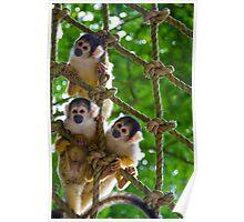 Cheeky Monkeys Poster