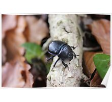 Black Beetle Stolling Through The Woods Poster