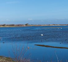 Blue Marsh In February by electronomist