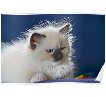 All fluffed up ! Poster