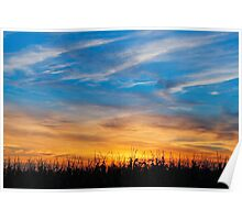 Maize at Sunset Poster