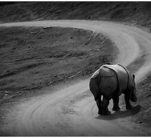 Rhino on the road by katie-k