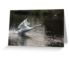Swan Take off 1 Greeting Card