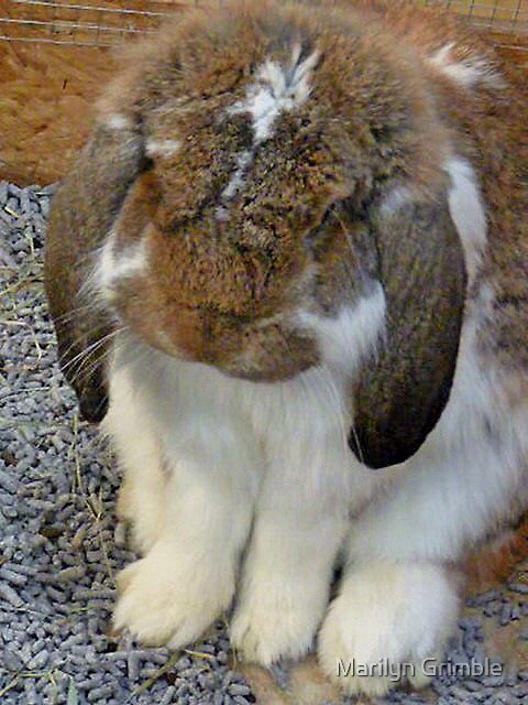 BUNNY BLISS by Marilyn Grimble