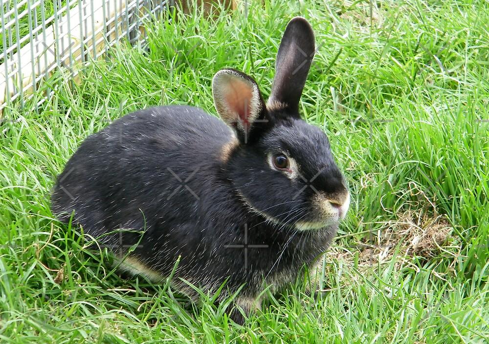 Cute Rabbit by LoneAngel
