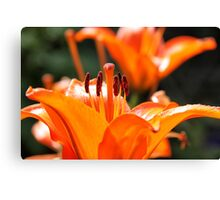 Burst of beauty Canvas Print