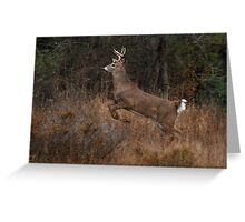 Early Morning Buck - White-tailed Deer Greeting Card