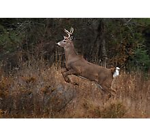 Early Morning Buck - White-tailed Deer Photographic Print