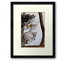 wisdom By Ken Killeen Framed Print