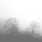Misty Tree's by Sue Fallon Photography