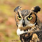 Great Horned Owl ( Bubo Virginianus) 1 by Jeff Ore