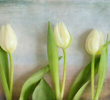 Three Tulips - JUSTART ©  by JUSTART