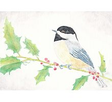 Chickadee on Holly Branch Photographic Print