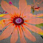 Light orange flower design by ?? B. Randi Bailey