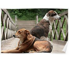 Dogs on a Bridge Poster