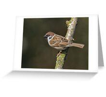 Tree sparrow - I ( Passer montanus) Greeting Card