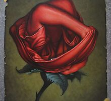 The Rose by FrankWermuth