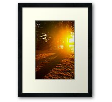 Sunshine in evening forest near lake Framed Print